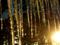 Icicles at Sunset