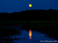Great Meadows Moonrise